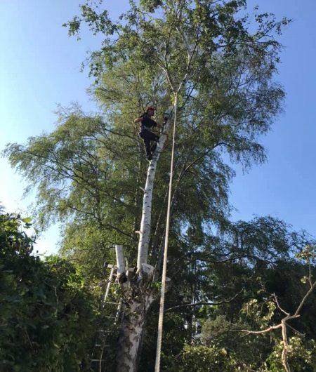 Trädfällning Trelleborg
